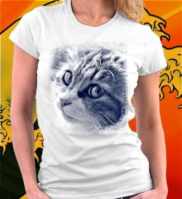 Прелестный котенок