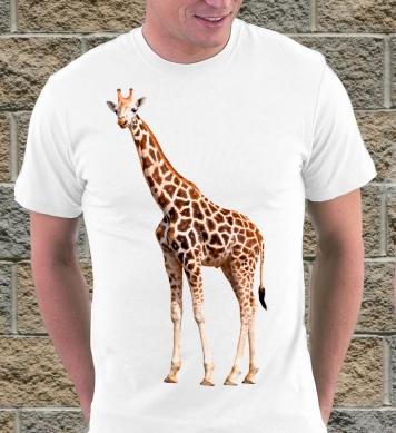 Улыбка африканского жирафа