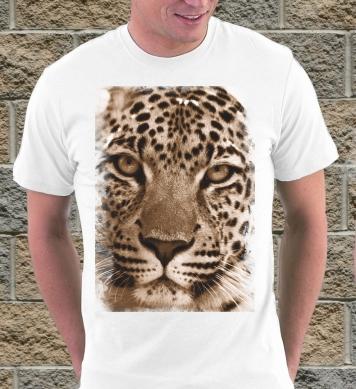 Взор леопарда