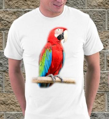 Большой попугай ара