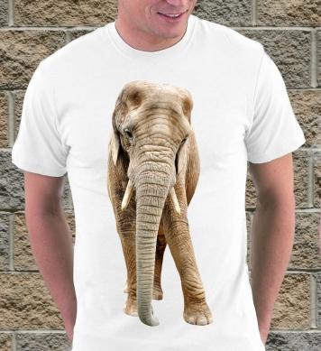 Стеснительный слон